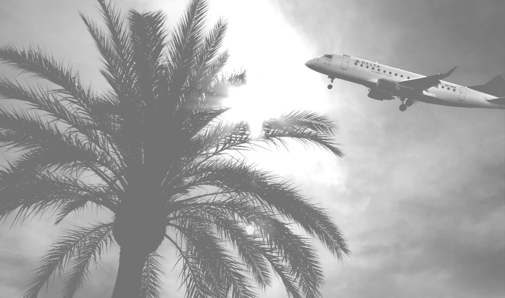Flugzeug und Palme